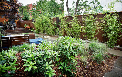 A Front Yard Regrows in Brooklyn
