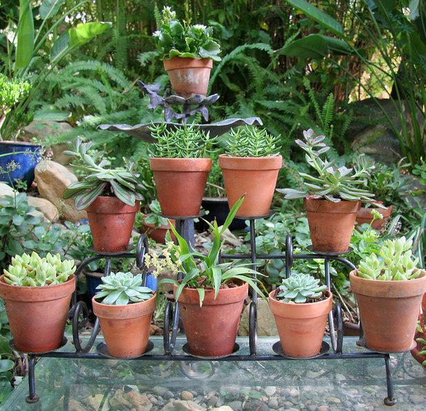 Mediterranean Garden by Donna Lynn - Landscape Designer