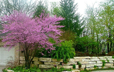 10 Top Mid-Atlantic Native Plants