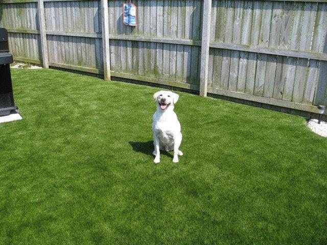 Hundegerechter Garten So Machen Sie Ihren Hund Glucklich