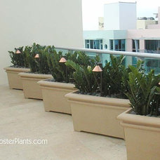 Tropical Landscape by FosterPlants, Inc.