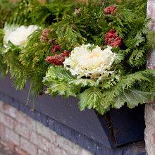 Så odlar du grönkål själv – nyttigt och snyggt