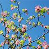 Farbe des Monats Februar: Blütenrosa!