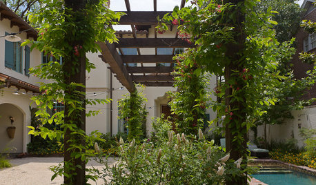 6 Amazing Vines & Creepers Perfect for Indian Gardens