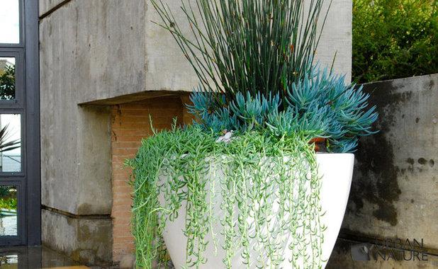 Modern Garden by Troy Silva Design Group Inc.