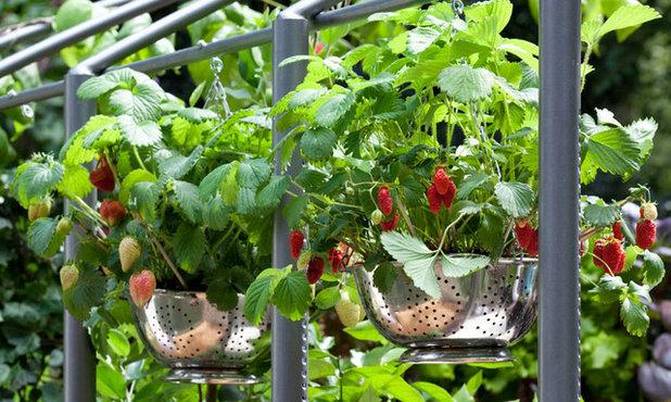 Modern Garten by Aralia: Innovation in Landscape Design