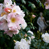 Pacific Northwest Gardener: What to Do in July