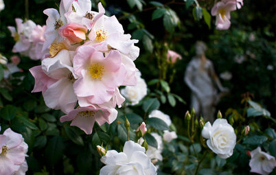 Pruning Secrets for Exquisite Roses