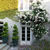 Decora tu fachada con flores y plantas