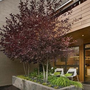Photo of a modern landscaping in Denver.