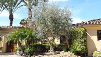 RSF Olive Trees