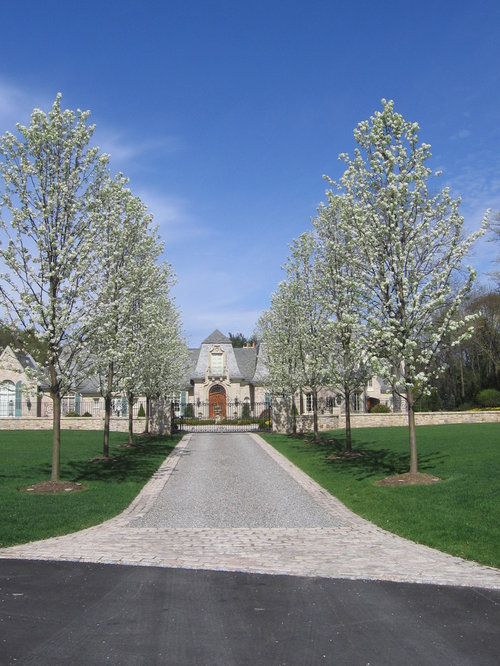 Best Tree Lined Driveway Design Ideas amp Remodel Pictures