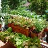 Vous voulez cultiver votre propre nourriture ? Lisez d