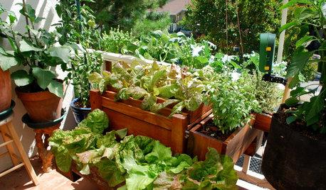 Vous voulez cultiver votre propre nourriture ? Lisez d'abord ceci