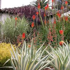 Mediterranean Landscape by Avant Garden