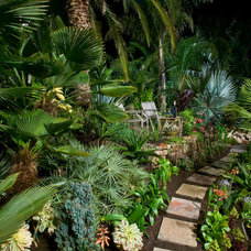 Tropical Landscape by Golden Gate Palms and Exotics