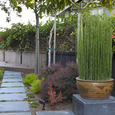 Asian Landscape by Shepard Design Landscape Architecture - AJ Shepard