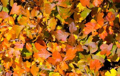Southwest Gardener's November Checklist