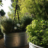 Grow Herbs for Fresh Flavor and Good Looks in the Garden