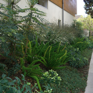 Inspiration for a modern landscaping in Los Angeles.