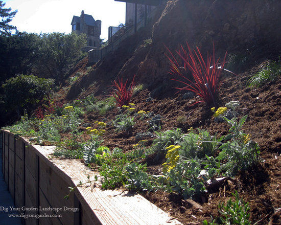Garden Design On Steep Slopes dramatic planting design for a steep slope and succulents adorn