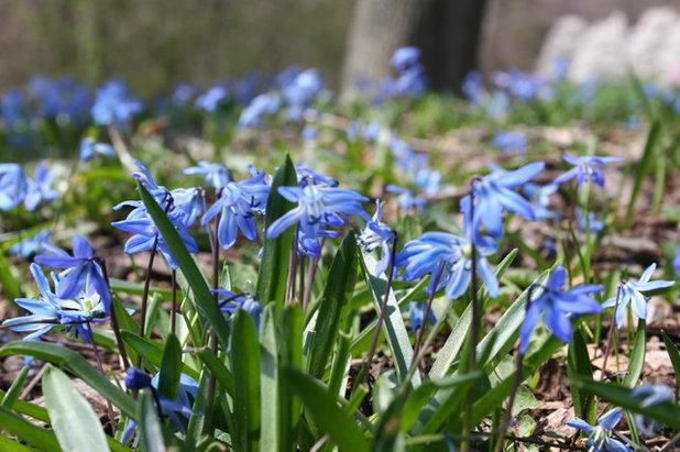 Современный Сад by Tulip World