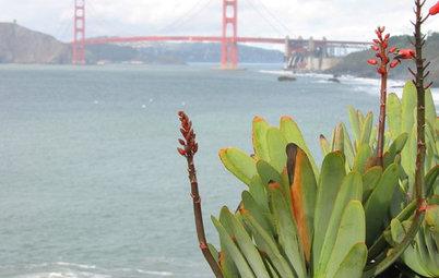 Great Design Plant: Fan Aloe