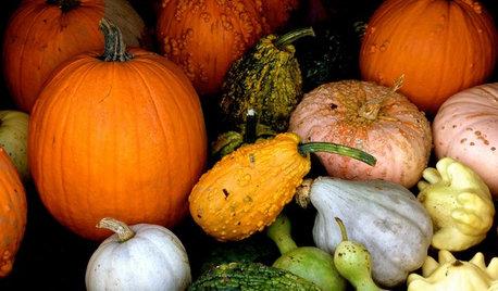 Que faire au potager en octobre ?