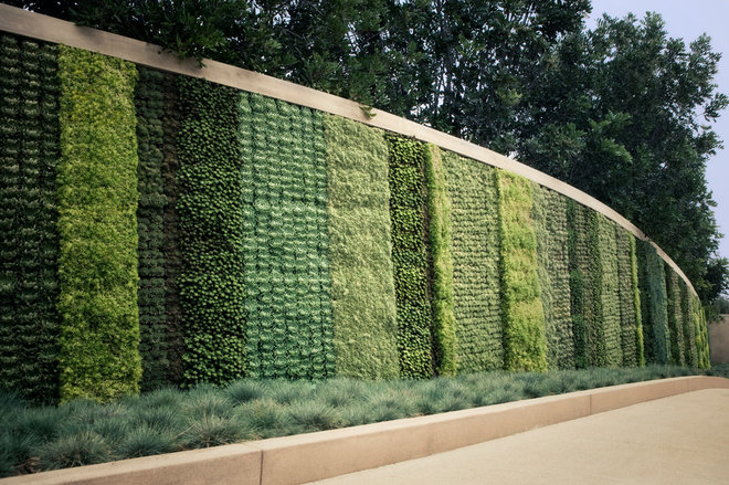 Contemporary Landscape by Seasons Landscaping