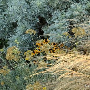 シアトルの大きい、秋の地中海スタイルのおしゃれな前庭 (ゼリスケープ、庭への小道、日向) の写真