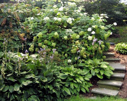 Best hosta gardens design ideas remodel pictures houzz for Hosta garden designs