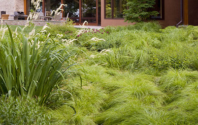 Great Design Plant: Carex Sprengelii