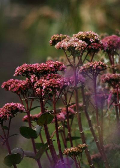 Landhausstil Garten by Laara Copley-Smith Garden & Landscape Design
