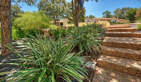 Outdoor Plant Profile: Dianella