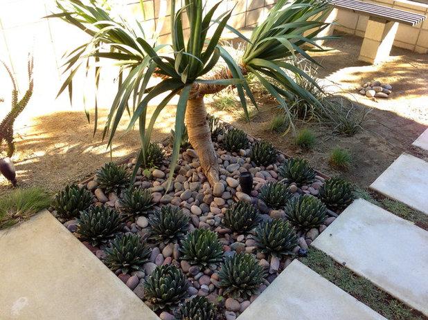 Modern Garden Shayan House