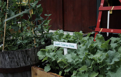 Cool-Season Vegetables: How to Grow Kale