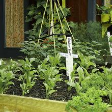 How to Start a Cool-Season Vegetable Garden
