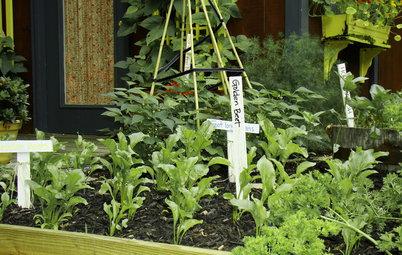 植物の動きが活発に。春の庭を楽しもう【3月のガーデニング】