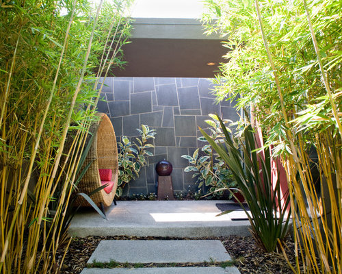 Bamboo Plant Ideas, Pictures, Remodel and Decor
