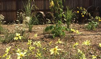 Sierra Wildflower and Grass Garden