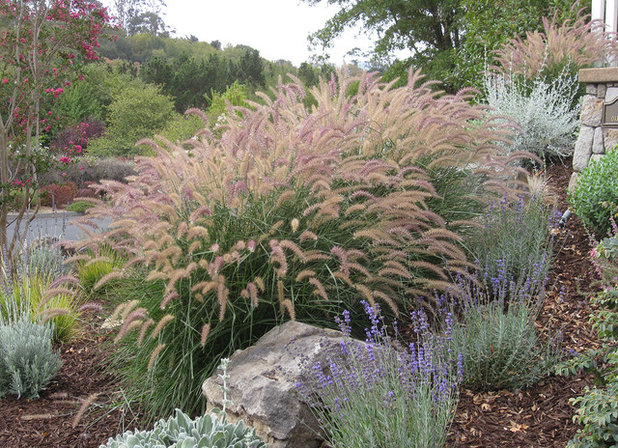 6 gorgeous plant combos with low water ornamental grasses for Low ornamental grasses