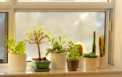 Houzz Call: Show Us Your Windowsill Garden