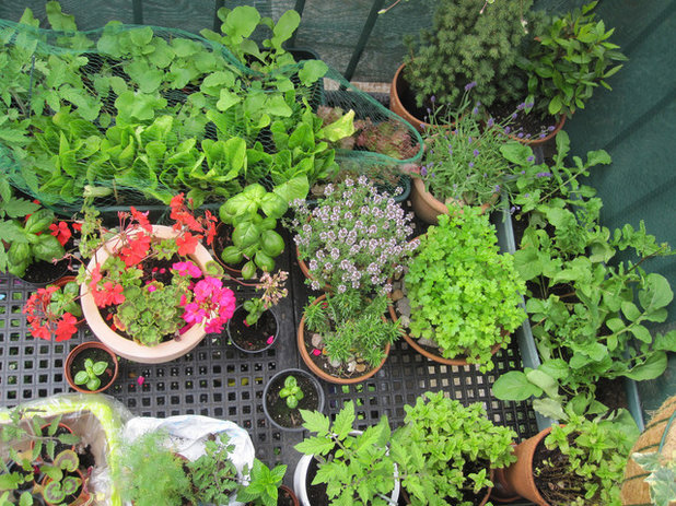 Eclectic Landscape Small Gardens