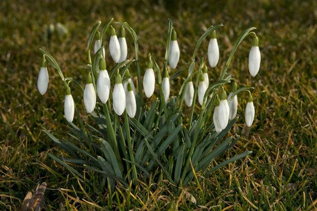 Der Garten Im Februar der garten im februar was jetzt zu tun ist