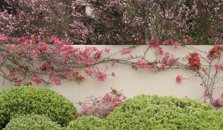 How Climbing Plants Can Improve Your Garden