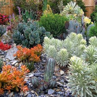 Contemporary back xeriscape full sun garden in San Luis Obispo.