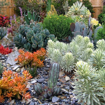 South County Succulents
