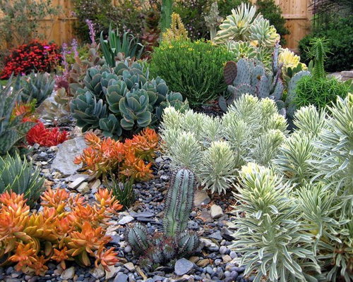 cactus garden ideas  houzz, Beautiful flower