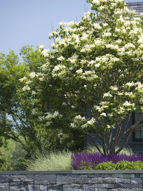 Dwarf korean lilac tree ideas pictures remodel and decor
