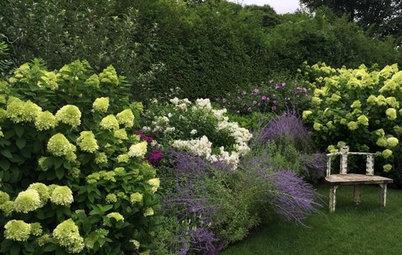 10+ Piante a Crescita Veloce per Giardino e Terrazzo